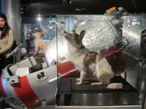cosmonaut museum st petersburg russia steika and belka